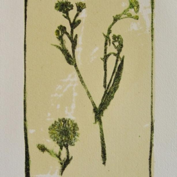 steendruk - klein streepzaad 20 x 13 cm (2)