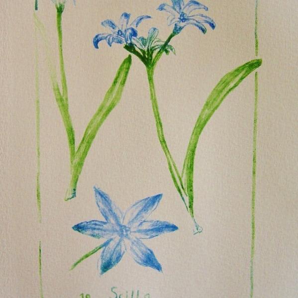 steendruk - scilla 20 x 13 cm
